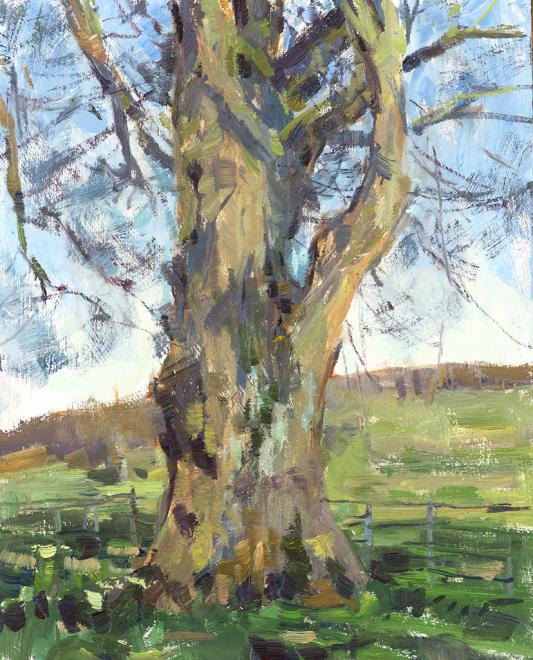 2015 Lime Tree  | Oil on Panel | 26 x 20 cm